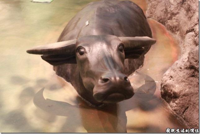 台南-國立台灣歷史博物館。早期的台灣農村生活-台灣水牛