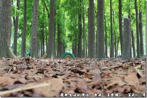 菁寮國小,菁彩100年,桃花心木林