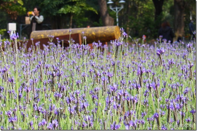 台南-2013百花祭於台南公園