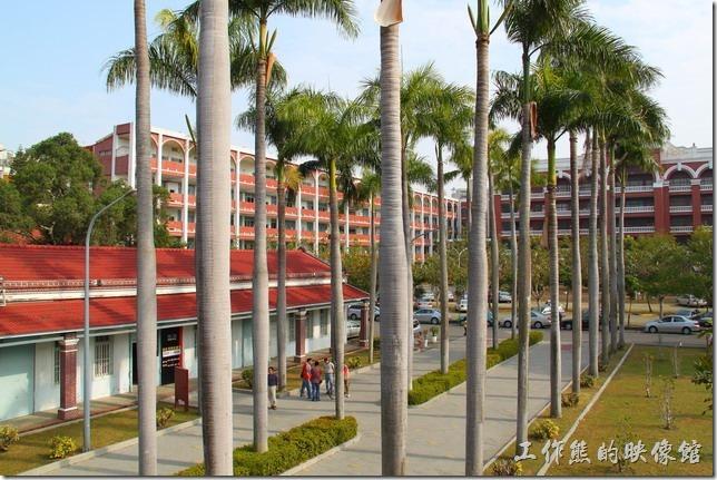 うえのしゃしんの景色はおれたち椰林大道と呼ぶです.