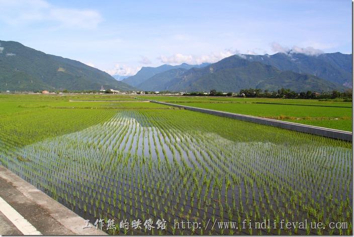 拜訪台東縣池上鄉時第二期稻作剛好插完秧,所以可以很清楚的看到水稻田裡倒影山巒的景象,而蓊翠的稻秧正是孕育出池上鄉優質好米的地方。