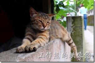 侯硐近來因為貓咪的聚集而聲名大噪