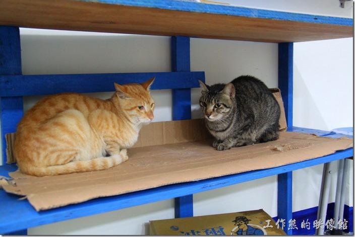 台北平溪線-侯硐。好冷的天,這是12月底拍的照片,大部分的貓咪都縮成一團。