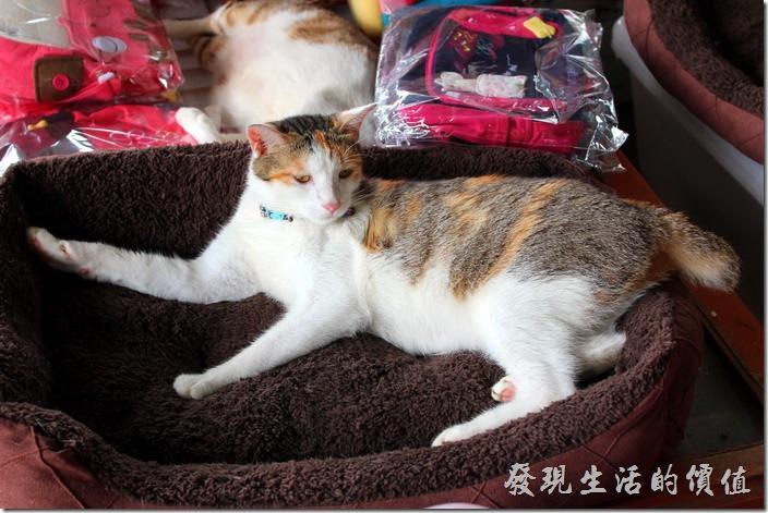 平溪線一日遊-侯硐貓村11