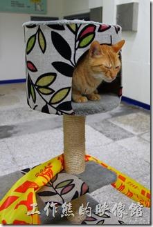 台北平溪線-侯硐。在侯硐車站內也有貓咪專用的休息室。