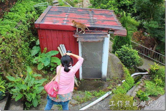 平溪線一日遊-侯硐貓村。真不得安寧,連爬個牆也要這樣被跟拍,貓語:「我要隱私權」。