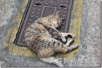 平溪線一日遊-侯硐貓村。看這兩隻貓睡成這副德性,連我都打起了哈欠。