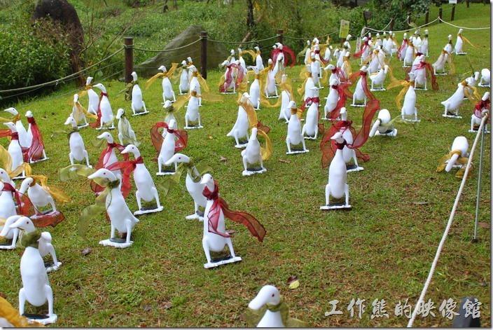 台北-誠品松菸。生態池旁有許多綁著絲巾的旱鴨子成群結隊。