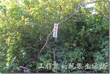 台南-四草竹筏綠色隧道05