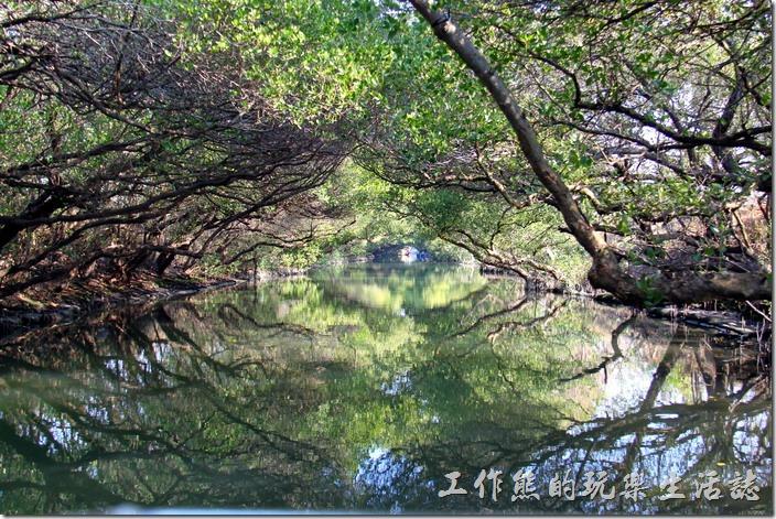 台南-四草竹筏綠色隧道11
