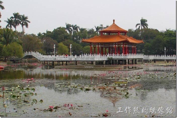 台南-2014中山公園百花祭。原來台南中山公園的池水看起來有點優氧化。