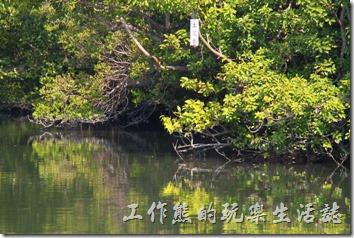 台南-四草竹筏綠色隧道(土沈香)