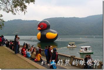 花蓮-鯉魚潭紅面番鴨。紅面番鴨的出現,遊客真的比平常多出了不少呢!