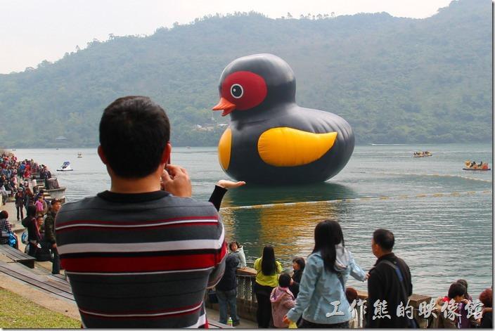 花蓮-鯉魚潭紅面番鴨。許多遊客都會使用錯位法來對小鴨做出各種動作。