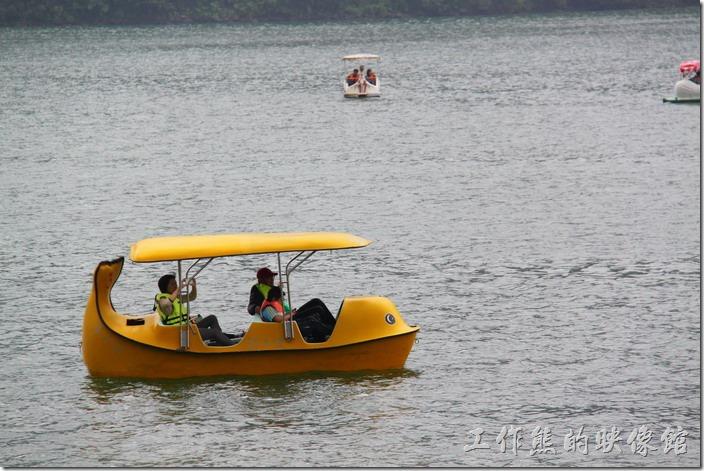 花蓮-鯉魚潭紅面番鴨。除了一般的天鵝船之外,這艄應該是「企鵝」船吧!