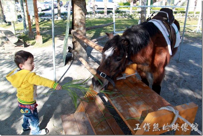 花蓮-理想大地渡假村-豐之谷生態公園。買牧草餵馬。開放時間08:30~17:00。