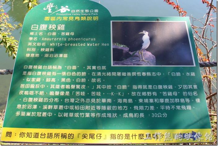 花蓮-理想大地渡假村-豐之谷生態公園(白腹秧雞)