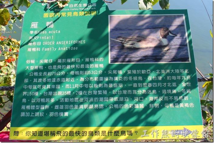 花蓮-理想大地渡假村-豐之谷生態公園(雁鴨)