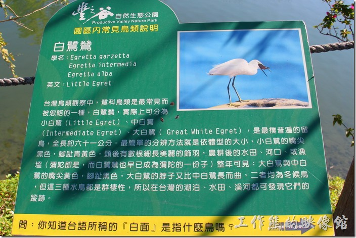 花蓮-理想大地渡假村-豐之谷生態公園(白鷺鷥)