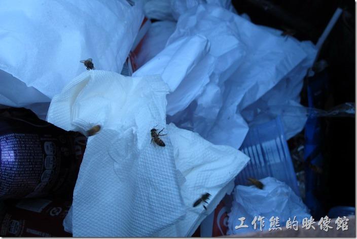 在「巴西」連【蜜蜂】都墮落撿起垃圾來了