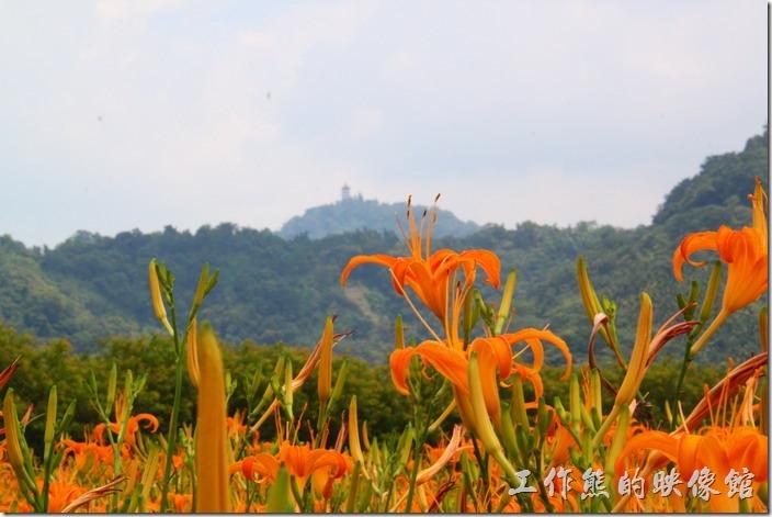 南投頭社-金針花田。照片遠處可以看到山頭上有個金塔(對不起!我的相機把光圈調到最大就只能這麼清楚了),名曰「慈恩塔」。