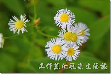 日本北九州-金鱗湖