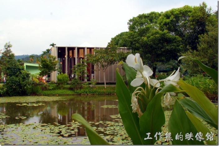 遠處的建築就是紙教堂的主體,前面還還有一座蓮花池,紙教堂看起來除了柱子使用紙建築之外,其屋頂則使用了其他的防水建材,否則光靠指應該無法承受台灣的無情雨水。