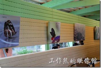 既然有毛毛蟲與蝴蝶的裝置藝術品,所以南投紙教堂的園區內也有關於蝴蝶的一些介紹簡介。