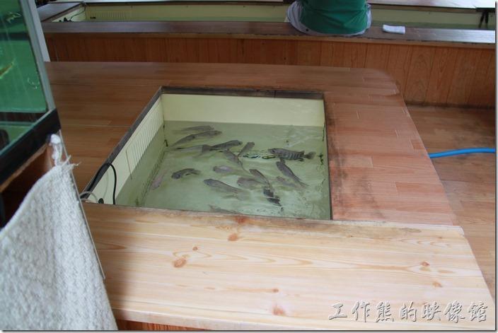 這家店裡面養了一堆魚,還養在一個一個小池子裡。