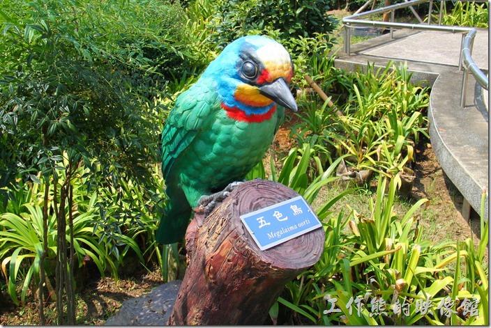 南投-天空之橋。有機會的話可以欣賞到這裏常出現的有五色鳥。