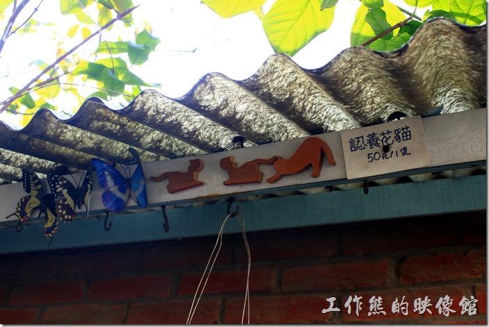 台南-花貓在顧的店。仔細看,在窗戶的雨遮有商品販賣,只是這次來販賣的東西似乎變少了。