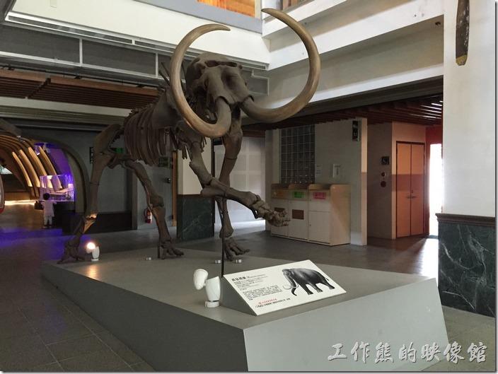 綠色魔法學校的一樓中庭有一座西伯利亞長毛象的化石模型,意在告誡人們要記取環境被破壞後的下場就是滅亡的教訓。