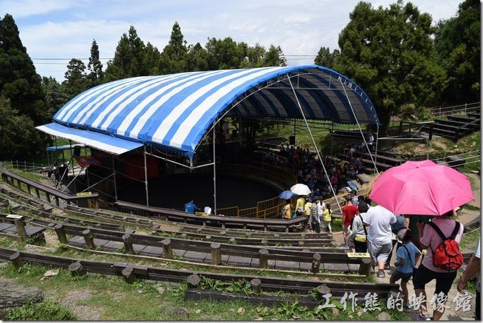 青青草原馬術表演的場地,夏天來其實還蠻熱的,所以早來早搶位,可以坐在樹陰下,中間左右的地方可以看到比較精彩的表演。