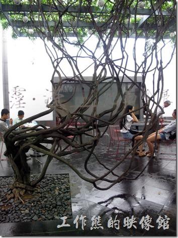 蘇州博物館內的連樹木都很有講究,有種禪的意境。
