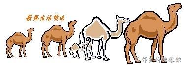 camel01