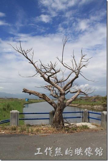宜蘭-新南休閒農場。當天的天氣好的不像話,當然也熱得不像話,藍天白雲綠地加上乾哭得老樹,形成衣服美麗的風景。
