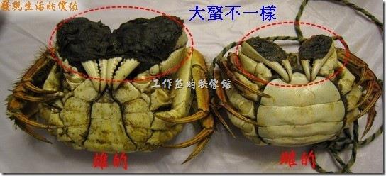 原來分辨公(雄)螃蟹及母(雌)螃蟹這麼簡單