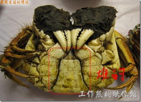 公螃蟹就是多了一片尖尖的「殼」呢!