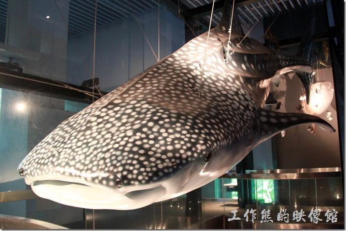 基隆-海洋科技博物館28
