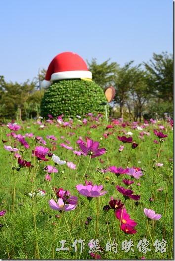 台南-2016百花祭-水萍溫公園11