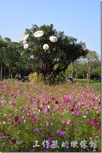 台南-2016百花祭-水萍溫公園12