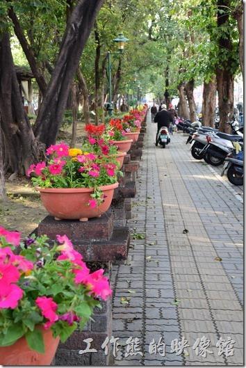 台南-2016百花祭-水萍溫公園。既然是百花祭,當然還得以「花」為主。