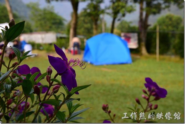 高雄那瑪夏-寧妮谷露營民宿的露營區。