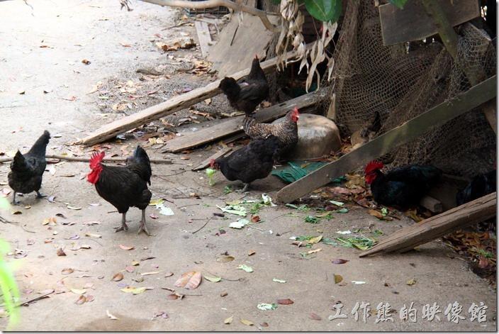 高雄田寮-礦區陳甚土雞城。旁邊有養了幾隻土雞,但我們吃的絕不是這裡養的,否則光養雞就沒時間,那還有空開餐廳。