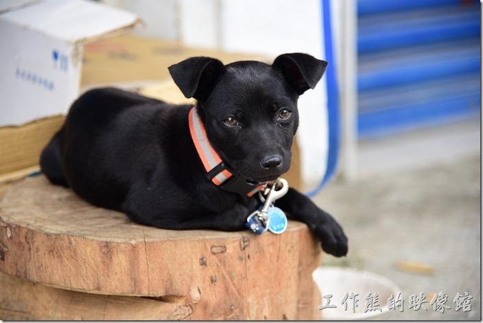 門前有一隻可愛的小黑狗~