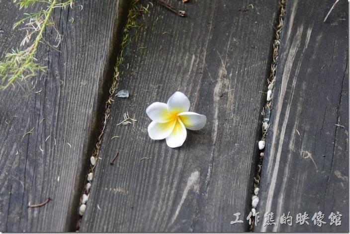 高雄內湖-【拾閒堂】餐廳旁的花木扶疏,有雞蛋花、鹿仔草(構樹)等,還有小池塘養有鯉魚。