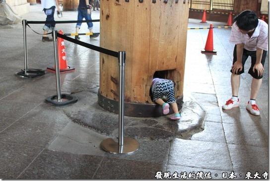 日本奈良-東大寺。大佛的鼻孔,又稱智慧之河。大殿的右後方有根柱子缺了一個小洞,俗稱「智慧之河」,據說只要可以鑽過柱洞者,就可以祈福事業,愛情如願順遂。我個人覺得小朋友爬爬沒有問題,大人要是鑽進去,可能會卡在柱洞中動彈不得呢!