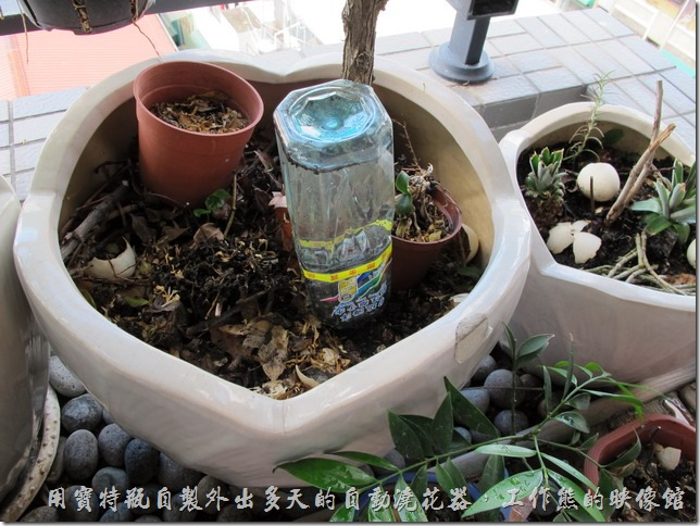 用寶特瓶自製外出多天的自動澆花器