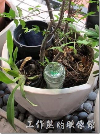 用寶特瓶自製外出多天的澆花器。利用回收的寶特瓶來充當自動澆花器,瓶子當然越大越好。