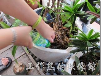 將盛滿水的寶特瓶栽入花盆的土壤中,土讓會滿滿吸收寶特瓶中的水分,記得是先把花盆膠滿水以增加潮濕。